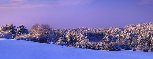 Landscape - Winter