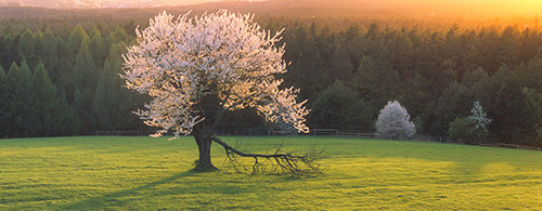 Krajobraz - Wiosna