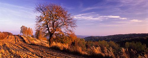Krajobraz - Jesień